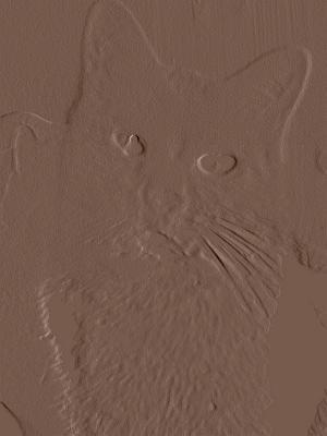 birma kitten hessen